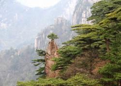 Fototapet, O pădure în munți