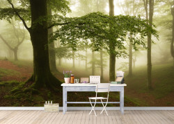 Fototapet, Pădurea în ceață 1