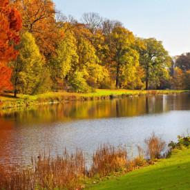Fototapet, Un râu și o pădure de toamnă