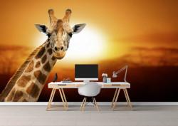 Fototapete, Girafă pe fundalul unui apus de soare