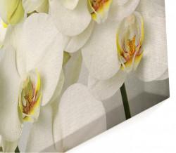 Multicanvas, Orhideea albă pe fundalul gri.