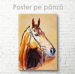 Poster, Cal maro