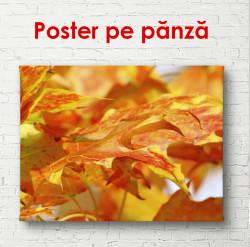 Poster, Frunzea de toamnă