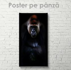 Poster, Gorilă