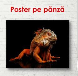 Poster, Iguana portocalie pe fond negru