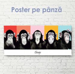 Poster, Maimuțele fac expresii faciale