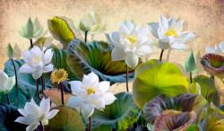 Fototapet, Flori albe în parc