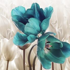 Fototapet, Lalele albastre printre albi