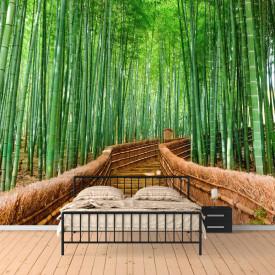 Fototapete 3D, Pădure de mesteacăn pe deal