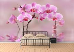 Fototapete, Frumoasă orhidee roz în reflectarea apei