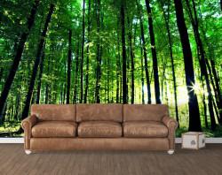 Fototapete, Pădure frumoasă verde