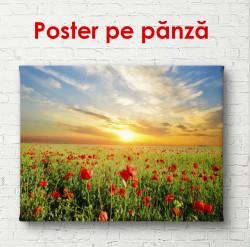 Poster, Câmp de maci la apus de soare