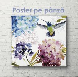 Poster, Colibri în flori