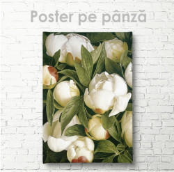 Poster, Muguri de bujori albi