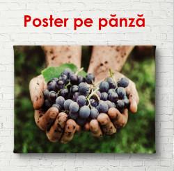 Poster, Strugurii în mână