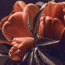 Fototapet, Lalele roșii
