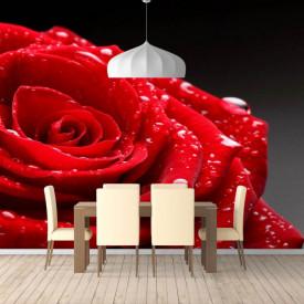 Fototapet, Trandafiri roșii pe fundal gri