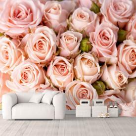 Fototapet, Un trandafiri bej