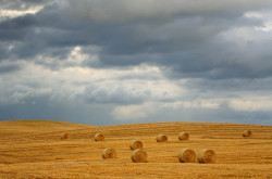 Fototapete Câmpul și cerul înorat
