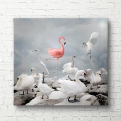 Poster, Flamingo roz