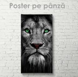 Poster, Leu grațios