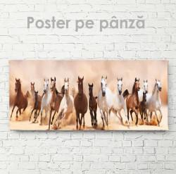 Poster, O turmă de cai sălbatici