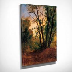 Poster, Pădurea