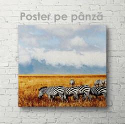 Poster, Turma de zebre