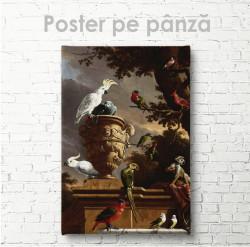 Постер, Papagali
