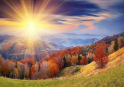 Fototapet,Apusul de soare în pădure
