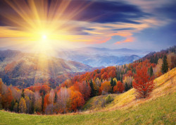 Fototapet, O pădure montană la amurg