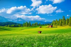 Fototapet, Peisajul cu iarbă verde și cer albastru