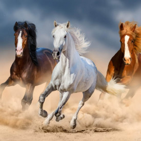 Fototapet, Trei cai în galop