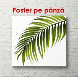 Poster, Frunză pe un fundal alb
