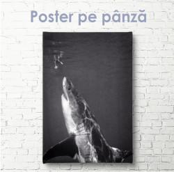 Poster, Rechin