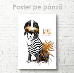 Poster, Regele plajei