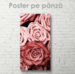 Poster, Trandafiri