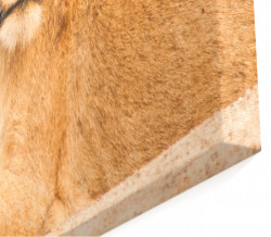 Tablou modular, Leoaică pe fundalul Savannei.
