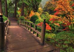 Fototapet, Frumusețea pădurii