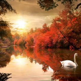 Fototapet, Lacul lebedelor din parc