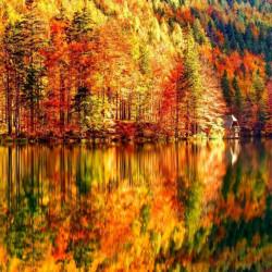 Fototapet Natura, Peisajul unei păduri toamna