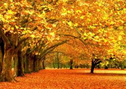 Fototapet, O pădure galbenă