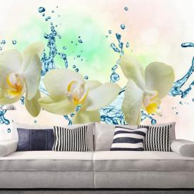 Fototapet, Orhidee albe și stropi de apă