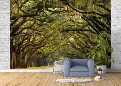 Fototapet, Pădurea fermecată