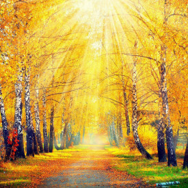 Fototapet, Pădurea însorită