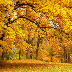 Fototapet, Parcul galben