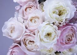 Fototapet, Trandafiri pe un fundal roz