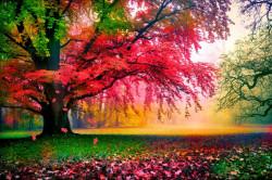 Fototapet, Un parc de primăvară frumos