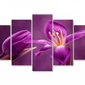 Multicanvas, Flori de culoare bordo