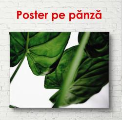 Poster, Frunze de culoare verde închis